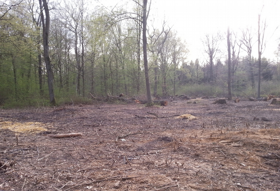 Zerstörung des Hambacher Forst für Kohle