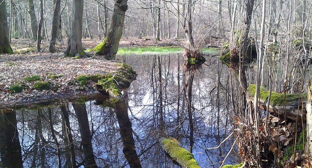 Hambacher Waldes